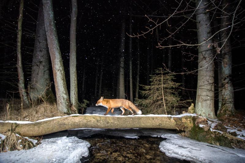Czech Nature Photo